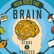 brain-storage-snip